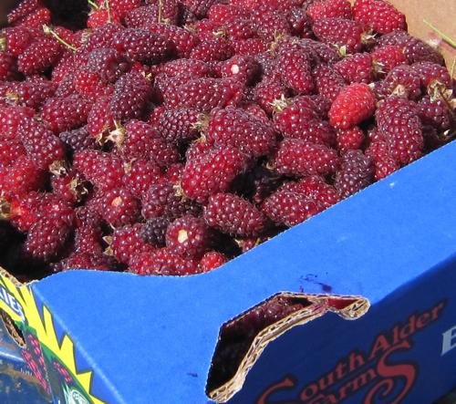 Box o tayberries