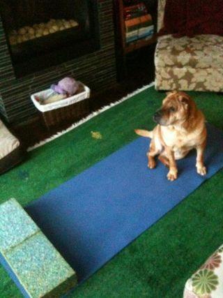 Emmy yoga