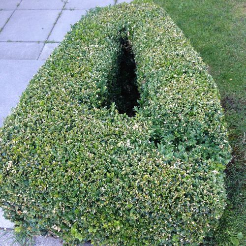 Vag hedge